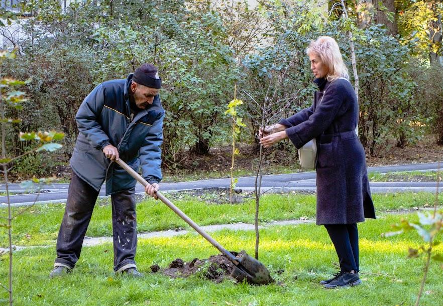 В Днепре более 5000 молодых деревьев высадят во дворах многоэтажек