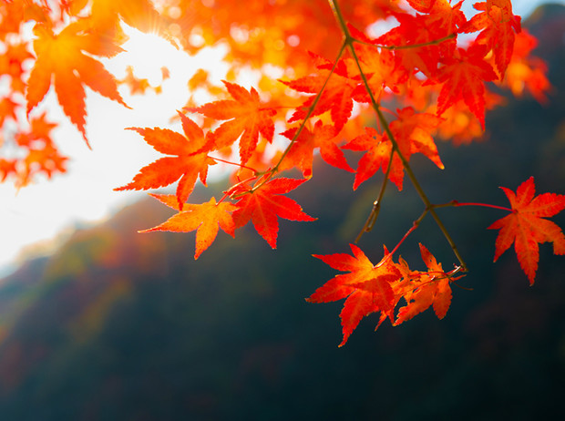 Какая погода будет в Днепре и области 5 октября