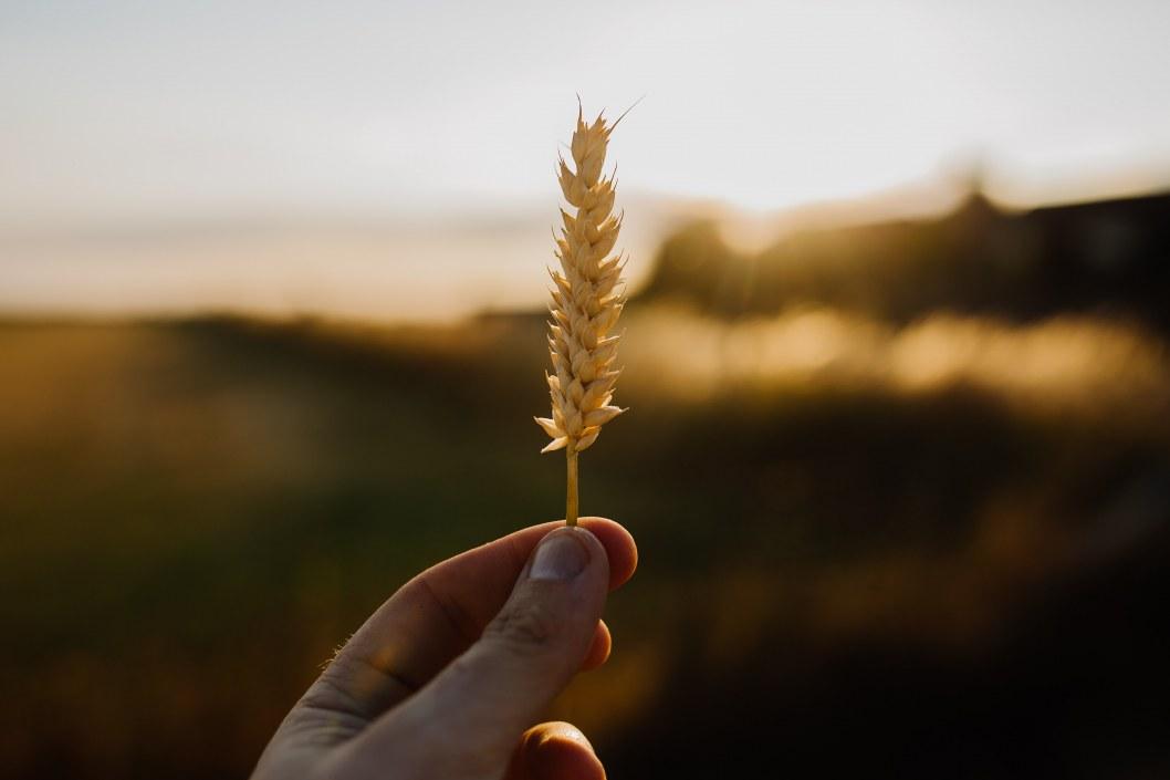 Жатва в разгаре: регион собрал почти 3 млн тонн зерна