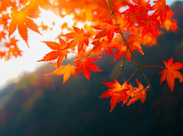 Какая погода будет в Днепре и области 10 ноября