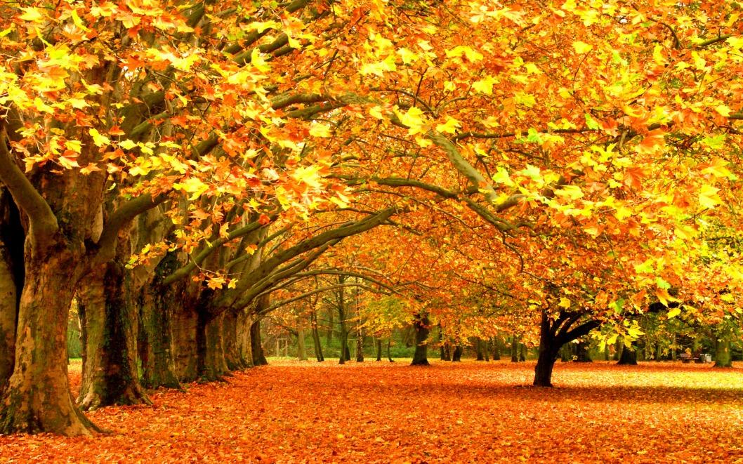 Какая погода будет в Днепре и области 8 ноября