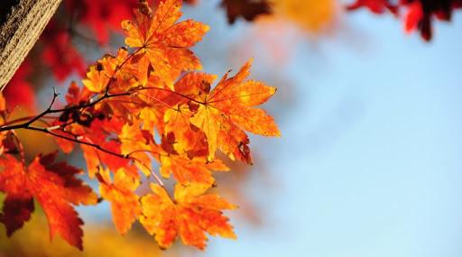 Какая погода будет в Днепре и области 6 ноября