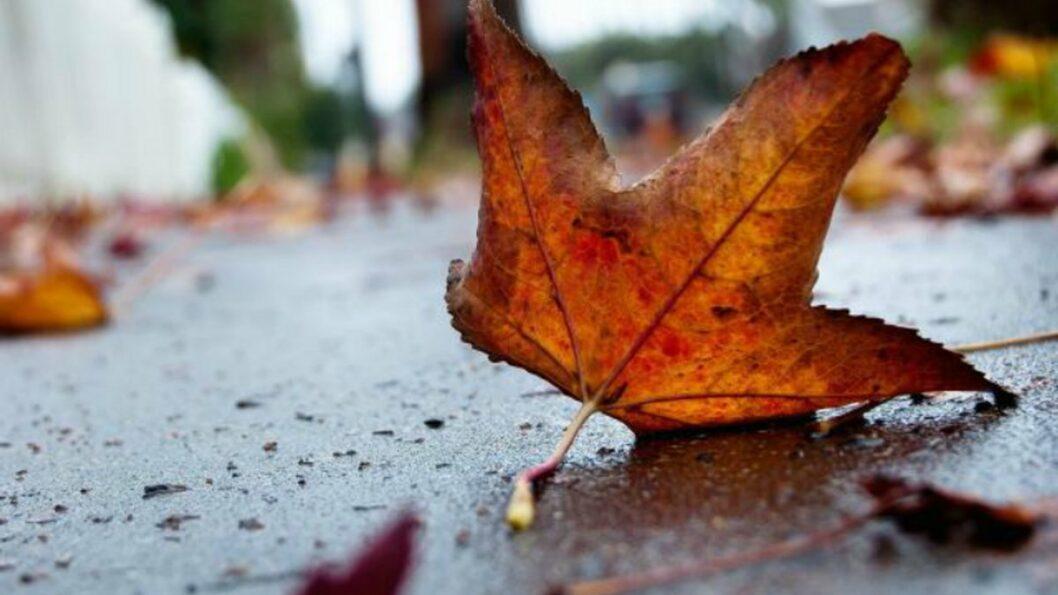 Какая погода будет в Днепре и области 13 ноября