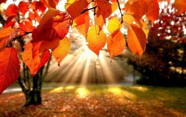 Какая погода будет в Днепре и области 16 ноября