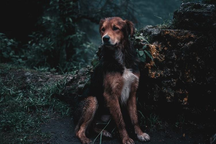 Три дня просидела в колодце с ледяной водой: в Днепре спасают собачку