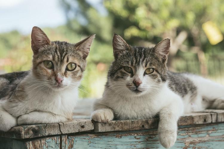 В Днепре волонтеры спасли 36 котов из исправительной колонии
