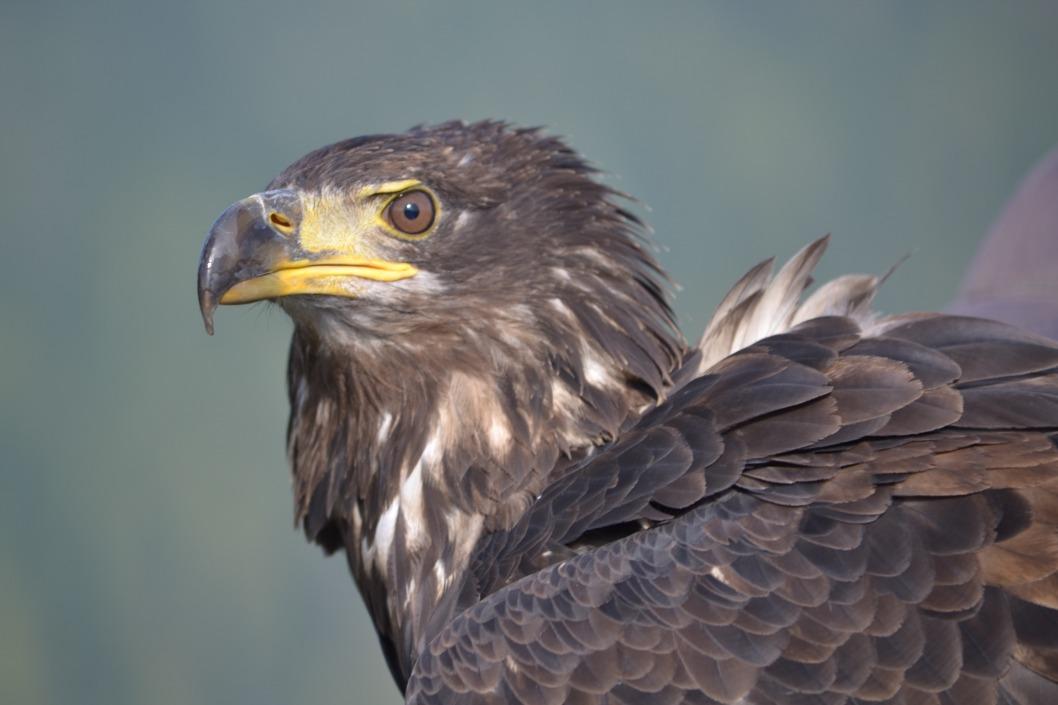 В Днепропетровской области мужчина в собственном дворе создал реабилитационный центр для хищных птиц