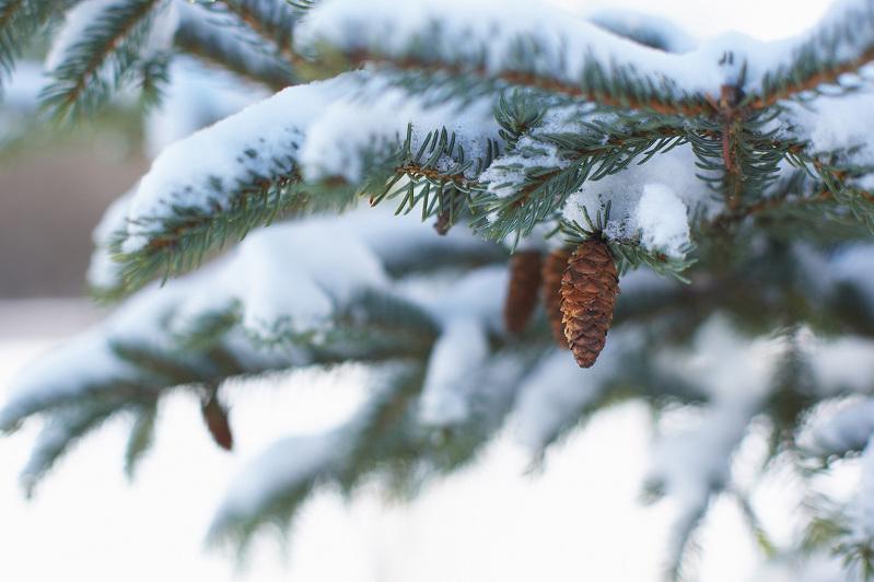 Какая погода будет в Днепре и области 5 декабря