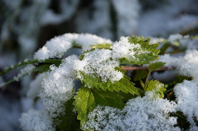 Какая погода будет в Днепре и области 31 декабря