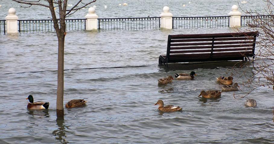 В Днепре в парке Глобы потоп: озеро вышло из берегов (ВИДЕО)