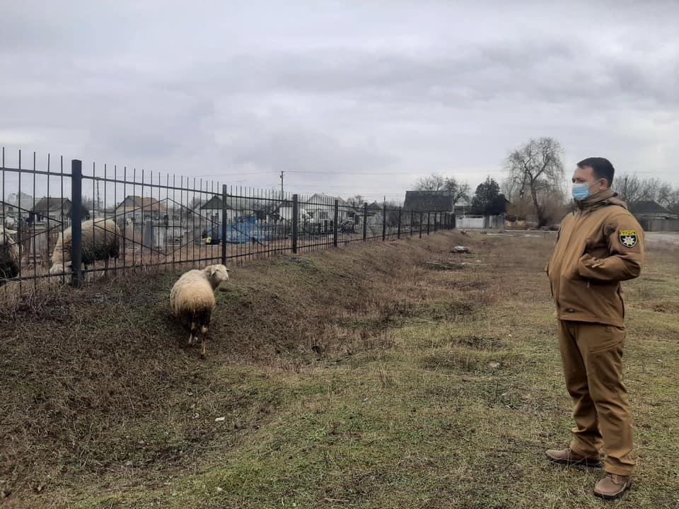 В Павлограде муниципалы прогнали отару овец с древнего еврейского кладбища (ФОТО)
