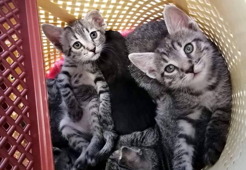 В Днепре неизвестный оставил сумку с маленькими котятами возле мусорника
