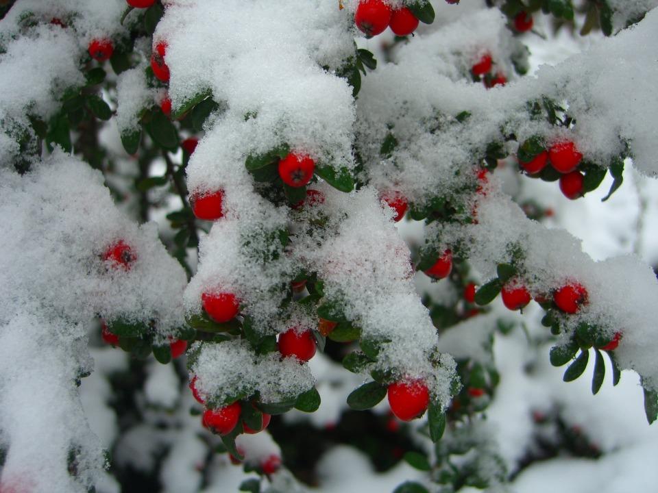 Снежная сказка: зимние пейзажи днепровского ботсада ДНУ