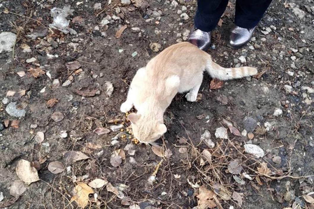 Помогли пушистику: в Днепре спасатели сняли с дерева кота
