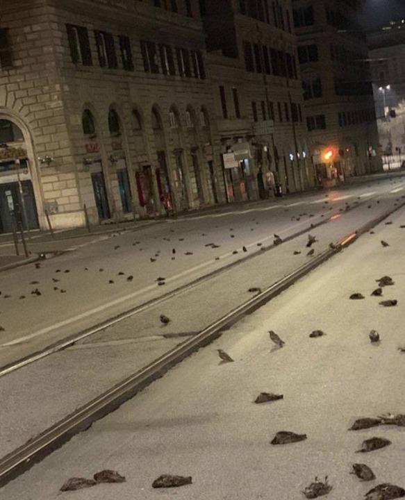 В Италии из-за новогодних фейерверков погибли сотни птиц