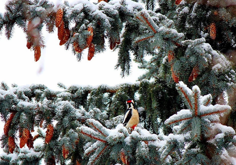 Какая погода будет в Днепре и области 8 января
