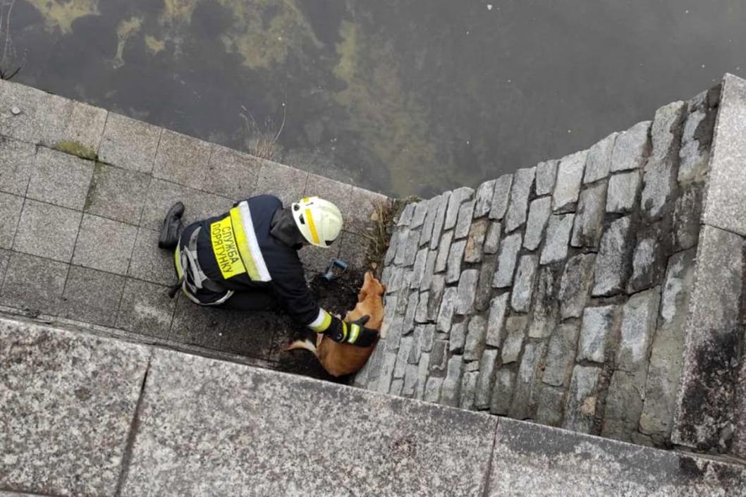 В Днепре спасали собак попавших в неприятности