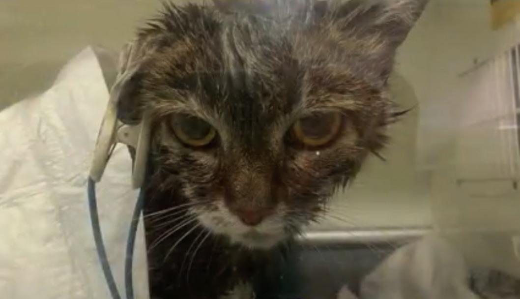 Днепровские ветеринары спасли кошку, которая чуть не сгорела заживо