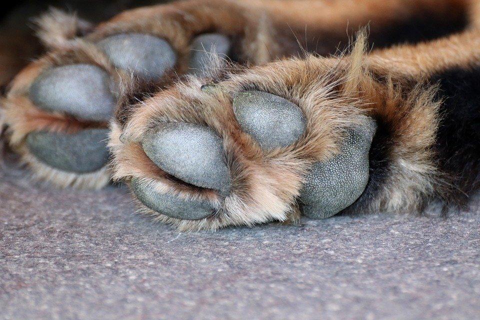 Не по-человечески: в Днепре по тротуару на веревке тащили умершую собаку