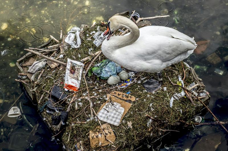 Смертоносный полиэтилен: на Днепропетровщине спасали лебедя