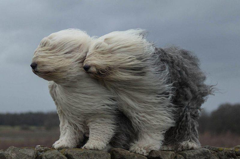 Silnyj veter 1