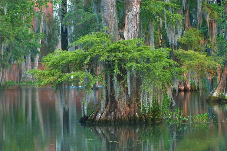 Luiziana