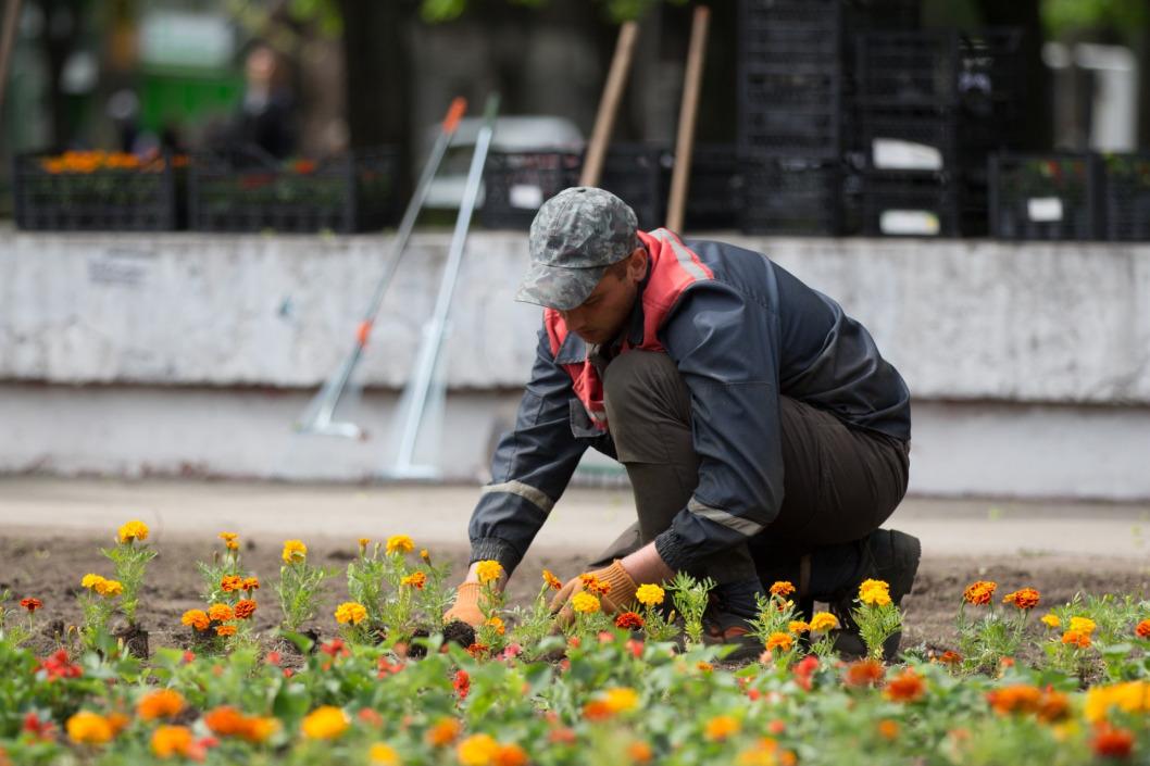 В Днепре в парках высадят 45 тысяч новых цветов