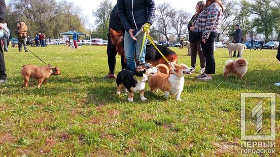 В Кривом Роге проходит весенняя выставка собак
