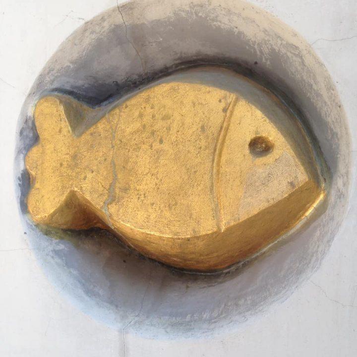 rybka1